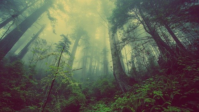 a beautiful forest